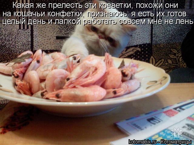 Котоматрица: Какая же прелесть эти креветки, похожи они на кошачьи конфетки, признаюсь: я есть их готов целый день и лапкой работать совсем мне не лень