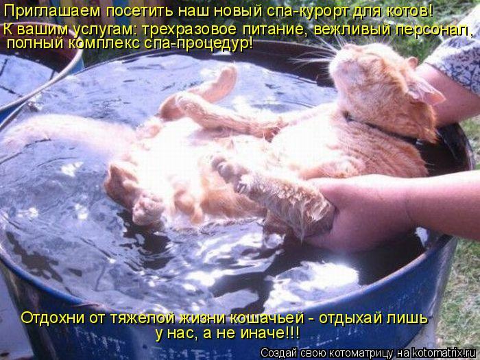 Котоматрица: Приглашаем посетить наш новый спа-курорт для котов! К вашим услугам: трехразовое питание, вежливый персонал, полный комплекс спа-процедур!