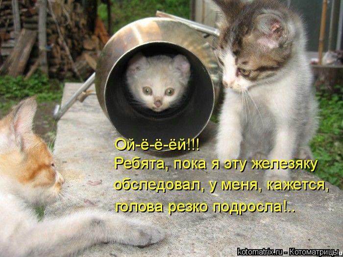 Котоматрица: Ой-ё-ё-ёй!!! Ребята, пока я эту железяку обследовал, у меня, кажется, голова резко подросла!..