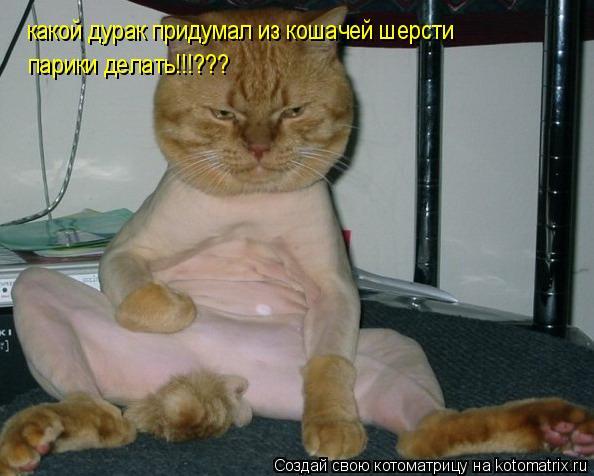 Котоматрица: какой дурак придумал из кошачей шерсти  парики делать!!!???