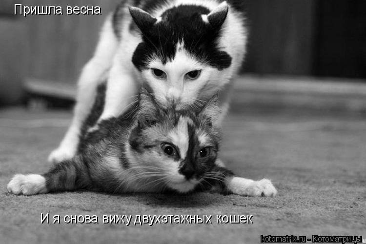 Котоматрица: Пришла весна И я снова вижу двухэтажных кошек