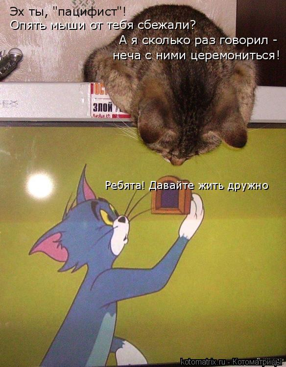 """Котоматрица: Эх ты, """"пацифист""""! Опять мыши от тебя сбежали? А я сколько раз говорил -  неча с ними церемониться! Ребята! Давайте жить дружно"""
