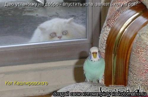 Котоматрица: Даю установку на добро - впустить кота, залезть коту в рот... Кот Кашпировского