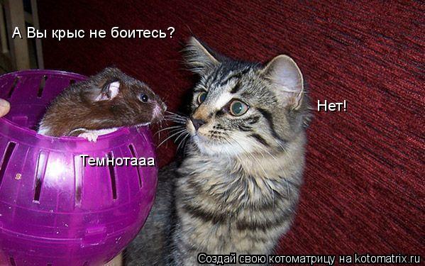 Котоматрица: А Вы крыс не боитесь? Нет! Темнотааа