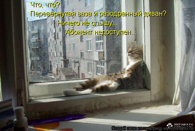 Котоматрица: Что, что? Перевёрнутая ваза и разодранный диван? Ничего не слышу... Абонент недоступен...