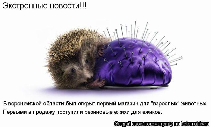 """Котоматрица: Экстренные новости!!! В воронежской области был открыт первый магазин для """"взрослых"""" животных. Первыми в продажу поступили резиновые ежихи"""