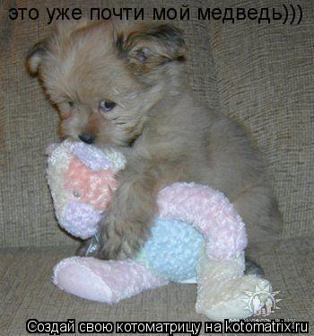 Котоматрица: это уже почти мой медведь)))