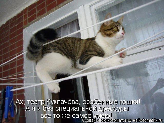 Котоматрица: Ах, театр Куклачёва, особенные кошки! А я и без специальной дрессуры  всё то же самое умею!