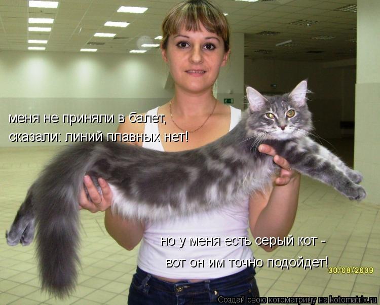 Котоматрица: меня не приняли в балет, сказали: линий плавных нет! но у меня есть серый кот - вот он им точно подойдет!
