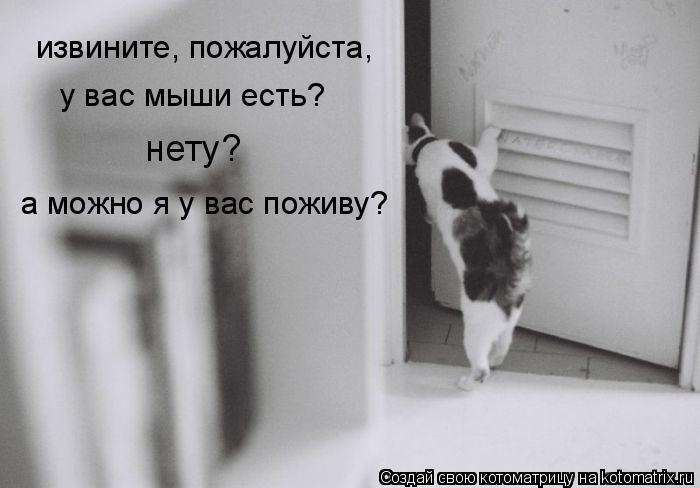 Котоматрица: извините, пожалуйста, у вас мыши есть? нету? а можно я у вас поживу?
