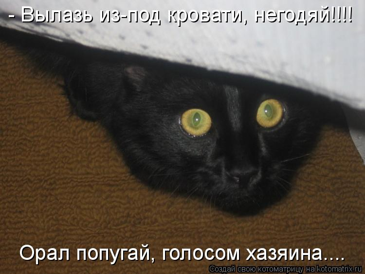 Котоматрица: - Вылазь из-под кровати, негодяй!!!!  Орал попугай, голосом хазяина....
