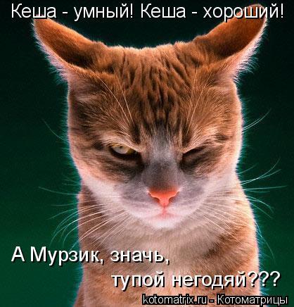 Котоматрица: Кеша - умный! Кеша - хороший! А Мурзик, значь,  тупой негодяй???