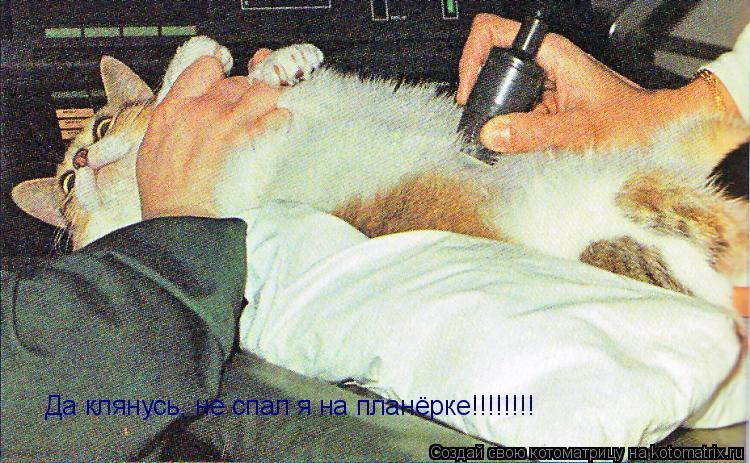 Котоматрица: Да клянусь, не спал я на планёрке!!!!!!!!