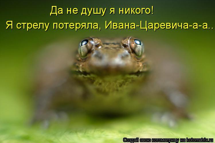 Котоматрица: Я стрелу потеряла, Ивана-Царевича-а-а... Да не душу я никого!