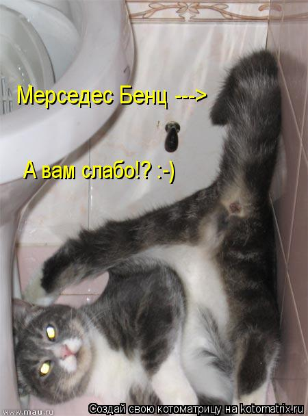 Котоматрица: Мерседес Бенц ---> А вам слабо!? :-)