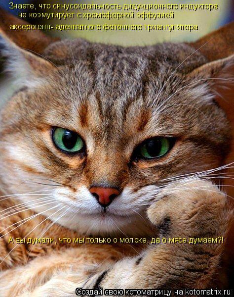 Котоматрица: Знаете, что синусоидальность дидукционного индуктора не коэмутирует с хромофорной эффузией  аксерогенн- адекватного фотонного триангуля