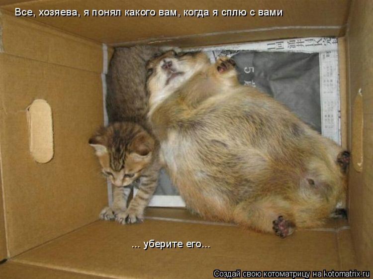 Котоматрица: Все, хозяева, я понял какого вам, когда я сплю с вами ... уберите его...
