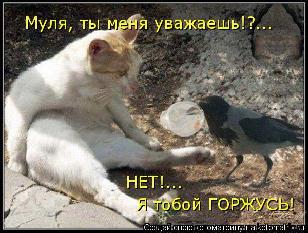 Котоматрица: Муля, ты меня уважаешь!?... НЕТ!... Я тобой ГОРЖУСЬ!
