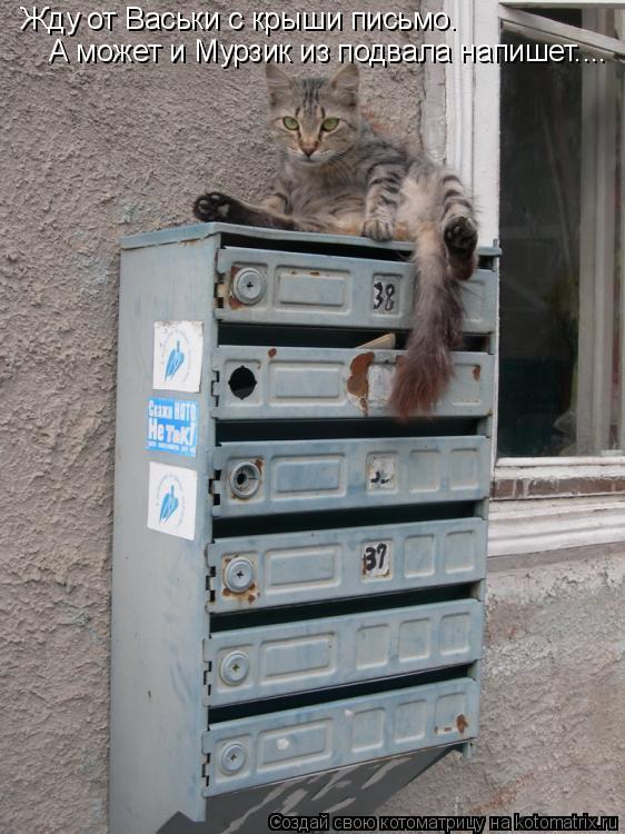 Котоматрица: Жду от Васьки с крыши письмо.  А может и Мурзик из подвала напишет....