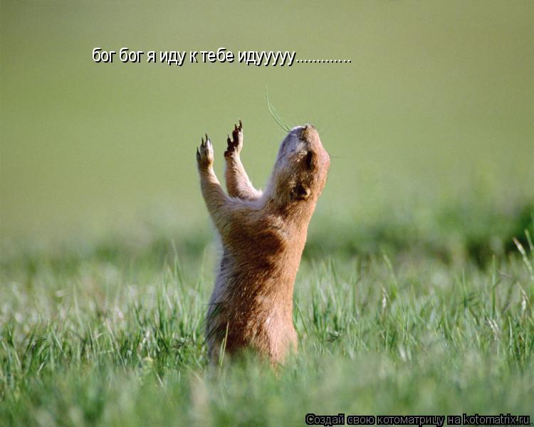 Котоматрица: бог бог я иду к тебе идууууу.............