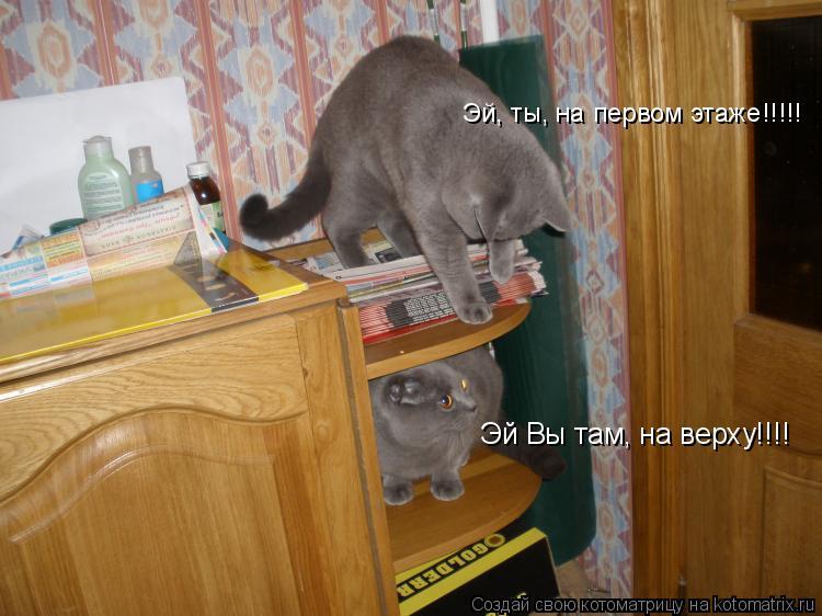 Котоматрица: Эй Вы там, на верху!!!! Эй, ты, на первом этаже!!!!!