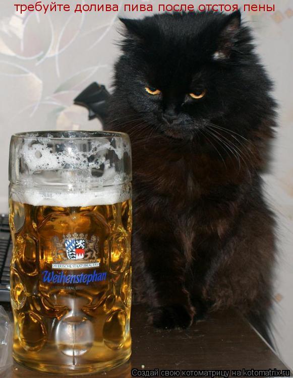 Котоматрица: требуйте долива пива после отстоя пены