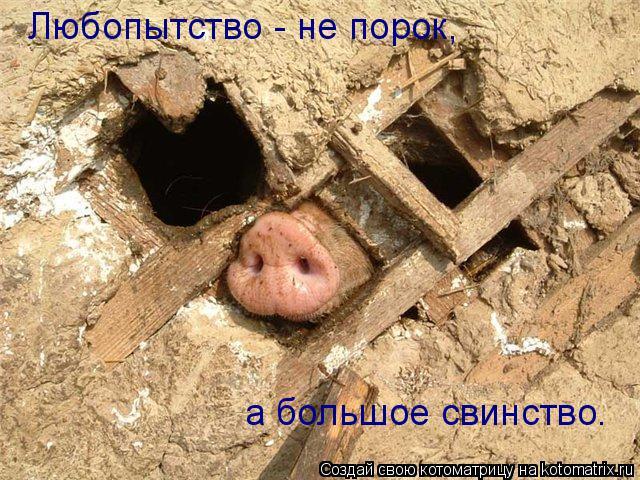 Котоматрица: Любопытство - не порок, а большое свинство.