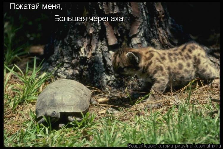 Котоматрица: Покатай меня, Большая черепаха.