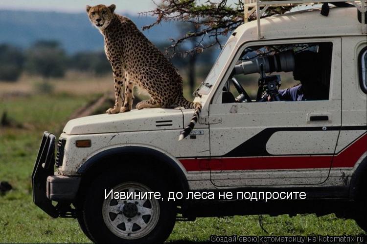 Котоматрица: Извините, до леса не подпросите
