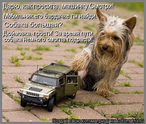 Котоматрица: собака немного смогла подрасти.. Дарю, как просила, машинку.Смотри! Мобильник,его бардачке ты найди. Собака большая?  Дюймовка, прости! За вре