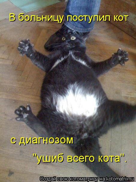 """Котоматрица: В больницу поступил кот  с диагнозом  """"ушиб всего кота""""."""