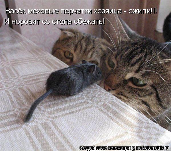 Котоматрица: Васёк,меховые перчатки хозяина - ожили!!! И норовят со стола сбежать!