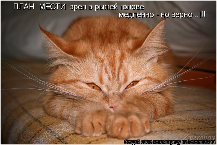 Котоматрица: ПЛАН  МЕСТИ  зрел в рыжей голове  медленно - но верно ..!!!