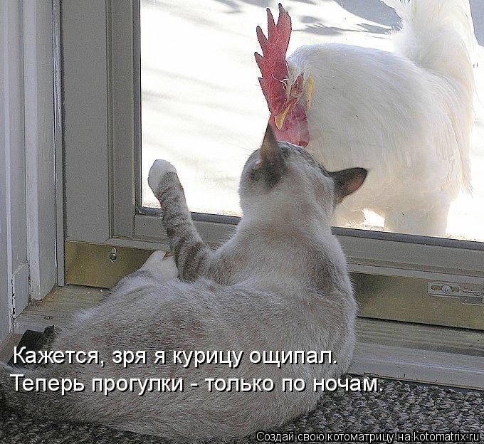 Котоматрица: Кажется, зря я курицу ощипал. Теперь прогулки - только по ночам.