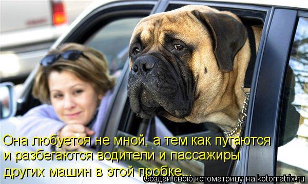 Котоматрица: Она любуется не мной, а тем как пугаются  и разбегаются водители и пассажиры  других машин в этой пробке...