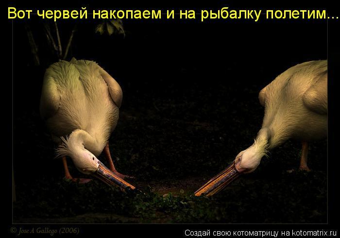 Котоматрица: Вот червей накопаем и на рыбалку полетим...