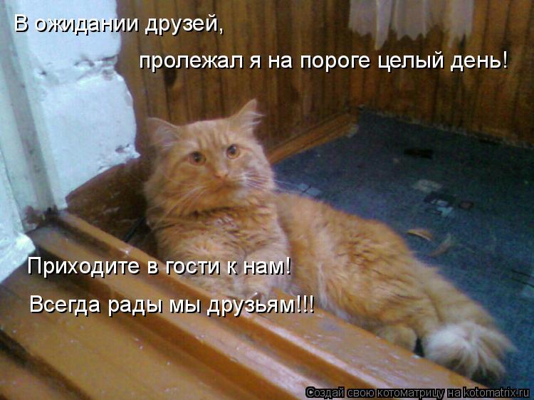 Котоматрица: В ожидании друзей,  пролежал я на пороге целый день! Приходите в гости к нам! Всегда рады мы друзьям!!!