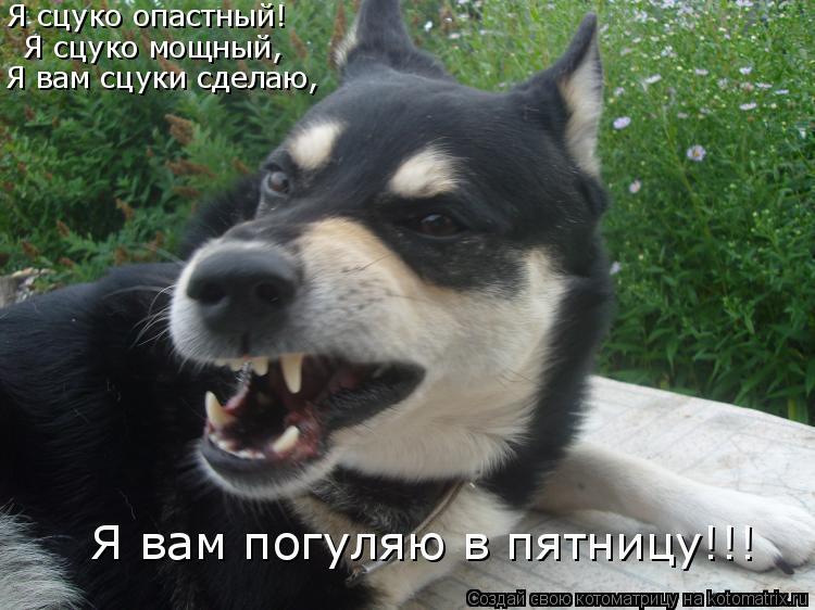Котоматрица: Я сцуко опастный! Я сцуко мощный, Я вам сцуки сделаю, Я вам погуляю в пятницу!!!