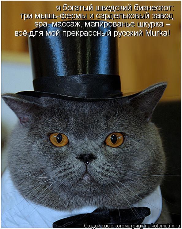Котоматрица: я богатый шведский бизнескот: три мышь-фермы и сардельковый завод. spa, массаж, мелированье шкурка – всё для мой прекрассный русский Murka!
