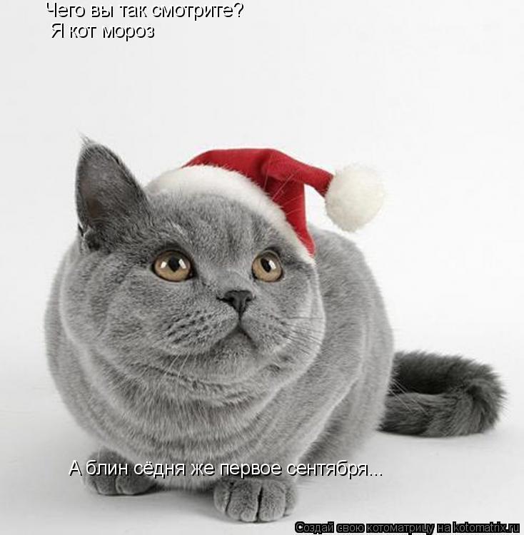 Котоматрица: Чего вы так смотрите? Я кот мороз А блин сёдня же первое сентября...