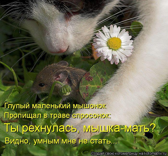 Котоматрица: Глупый маленький мышонок Пропищал в траве спросонок: Ты рехнулась, мышка-мать? Видно, умным мне не стать...