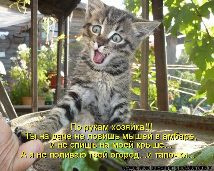Котоматрица: По рукам хозяйка!!! Ты на даче не ловишь мышей в амбаре, и не спишь на моей крыше... А я не поливаю твой огород...и тапочки...