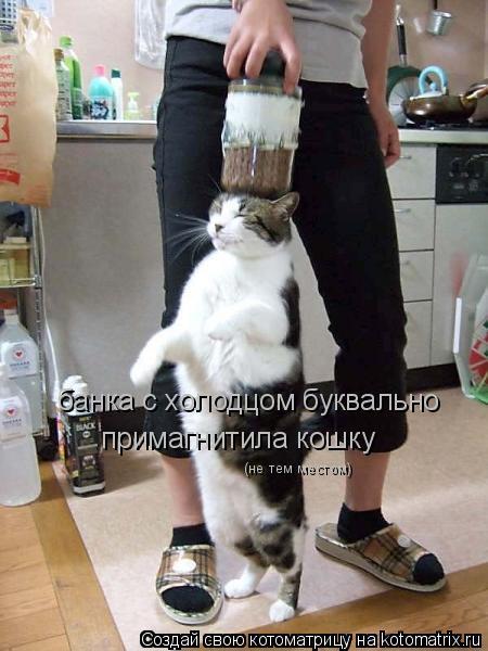 Котоматрица: банка с холодцом буквально примагнитила кошку (не тем местом)