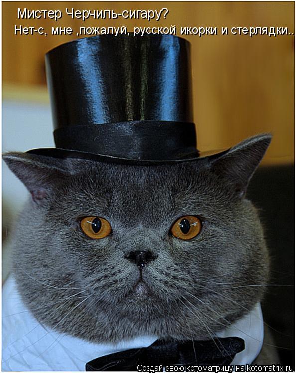 Котоматрица: Мистер Черчиль-сигару? Нет-с, мне ,пожалуй, русской икорки и стерлядки..