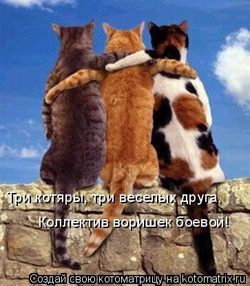 Котоматрица: Три котяры, три веселых друга, Коллектив воришек боевой!