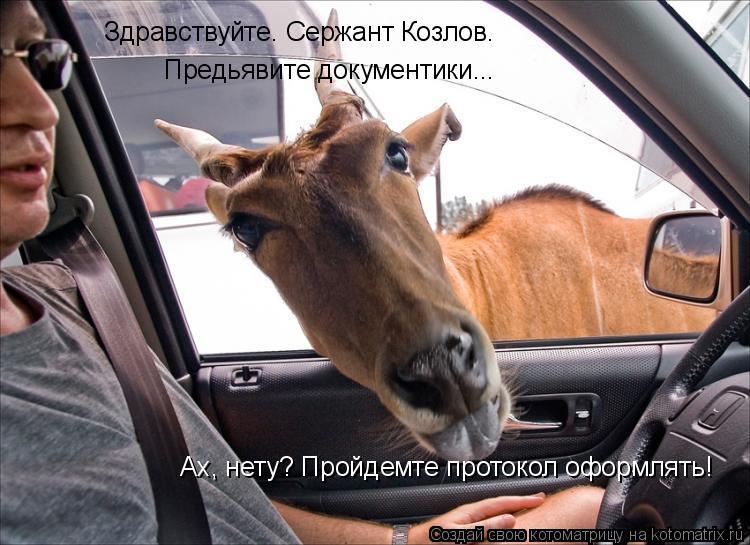 Котоматрица: Здравствуйте. Сержант Козлов.  Предьявите документики... Ах, нету? Пройдемте протокол оформлять!