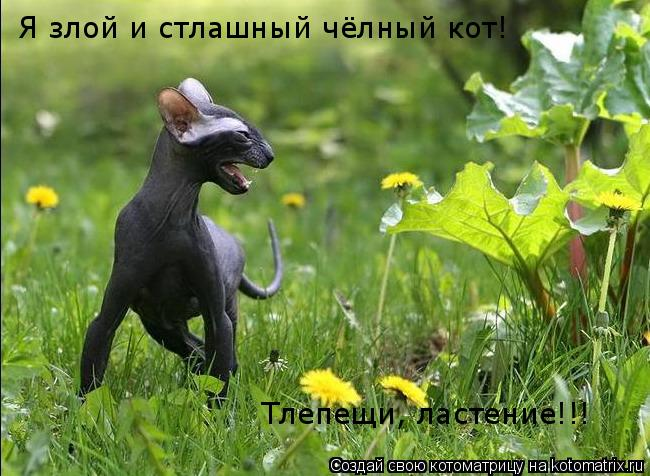 Котоматрица: Я злой и стлашный чёлный кот! Тлепещи, ластение!!!