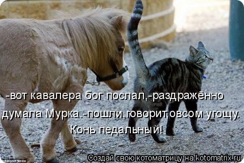 Котоматрица: -вот кавалера бог послал,-раздражённо  думала Мурка.-пошли-говорит,- овсом угощу. думала Мурка.-пошли-говорит,- овсом угощу. думала Мурка.-пошл