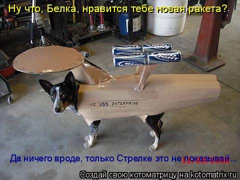 Котоматрица: Ну что, Белка, нравится тебе новая ракета? Да ничего вроде, только Стрелке это не показывай...