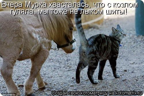 Котоматрица: Вчера Мурка хвасталась, что с козлом гуляла, мы тоже не лыком шиты!